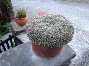 Lauzerte: So nen schönen Kaktus hatte ich auch mal. Seufz.