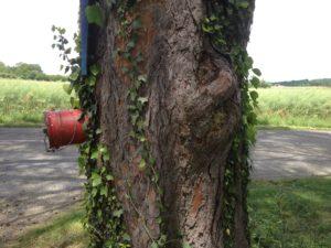 Baum mit Wasseranschluss