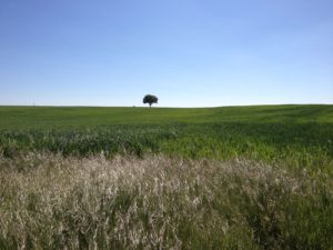 Geschichtete Landschaft